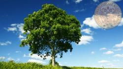 15 albero