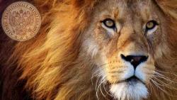 34 leone